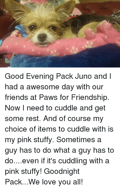 Stuffies: Good Evening Pack Juno and I had a awesome day with our friends at Paws for Friendship.  Now I need to cuddle and get some rest. And of course my choice of items to cuddle with is my pink stuffy. Sometimes a guy has to do what a guy has to do....even if it's cuddling with a pink stuffy!  Goodnight Pack...We love you all!