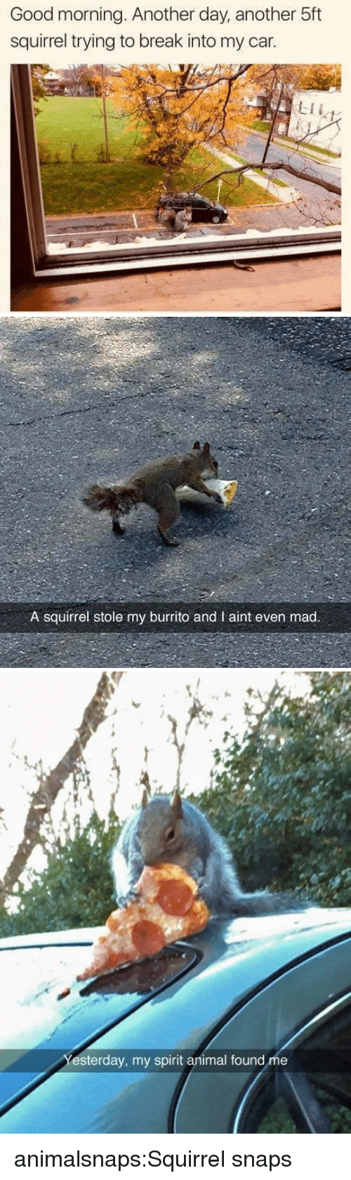 Target, Tumblr, and Good Morning: Good morning. Another day, another 5ft  squirrel trying to break into my car.  LII   A squirrel stole my burrito and I aint even mad.   et  esterday, my spirit animal found me animalsnaps:Squirrel snaps