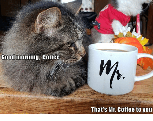 Good Morning Coffee Thats Mr Coffee To You Good Morning Meme On