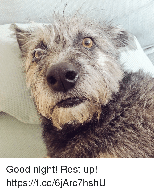 coeds: Good night! Rest up! https://t.co/6jArc7hshU