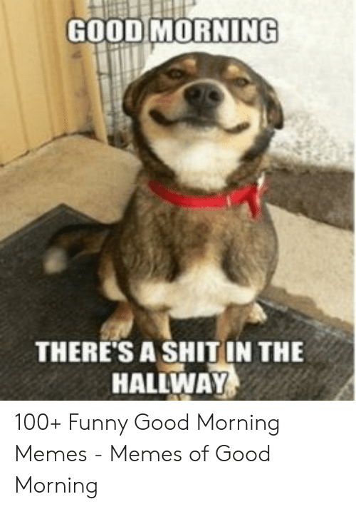 25 Best Memes About Funny Good Morning Memes Funny Good