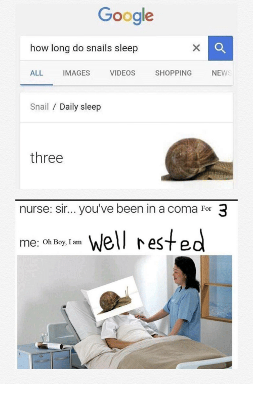 Google, Shopping, and Videos: Google  how long do snails sleep  ALL IMAGES VIDEOS SHOPPING NEW  Snail/ Daily sleep  three  nurse: sir... you've been in a coma For 3  me: o o ell rested  me: Oh Boy, I am