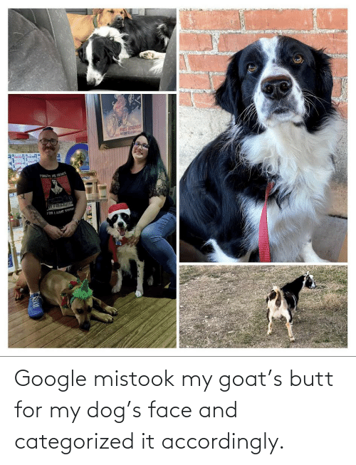 accordingly: Google mistook my goat's butt for my dog's face and categorized it accordingly.