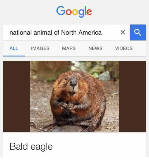 America, Animals, and Anime: Google  national animal of North America  ALL IMAGES  MAPS  NEWS  VIDEOS  Bald eagle