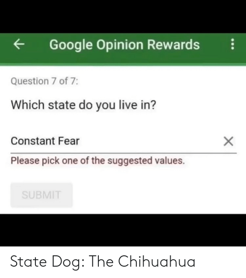 Chihuahua, Google, and Memes: Google Opinion Rewardsi  Question 7 of 7:  Which state do you live in?  Constant Fear  Please pick one of the suggested values.  SUBMIT State Dog: The Chihuahua