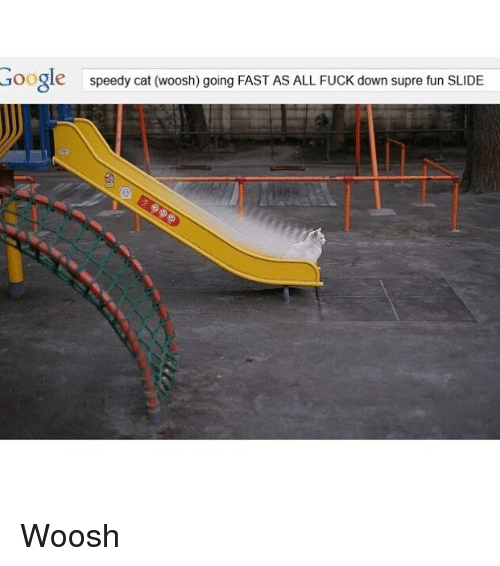 Cats, Fucking, and Funny: Google  speedy cat (woosh) going FAST AS ALL FUCK down supre fun SLIDE Woosh