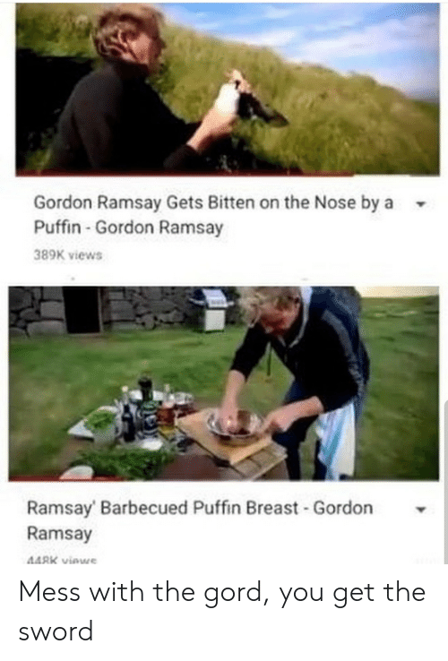 Gordon Ramsay, Sword, and Bitten: Gordon Ramsay Gets Bitten on the Nose by a  Puffin-Gordon Ramsay  389K views  Ramsay Barbecued Puffin Breast -Gordon  Ramsay  448K viewe Mess with the gord, you get the sword