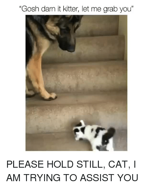 "Darn It: ""Gosh darn it kitter, let me grab you"" <p>PLEASE HOLD STILL, CAT, I AM TRYING TO ASSIST YOU<br/></p>"