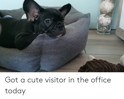 Cute, The Office, and Office: Got a cute visitor in the office today