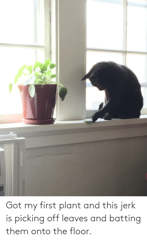 plant: Got my first plant and this jerk is picking off leaves and batting them onto the floor.