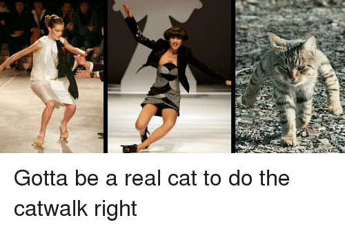 Funny, Cat, and Real