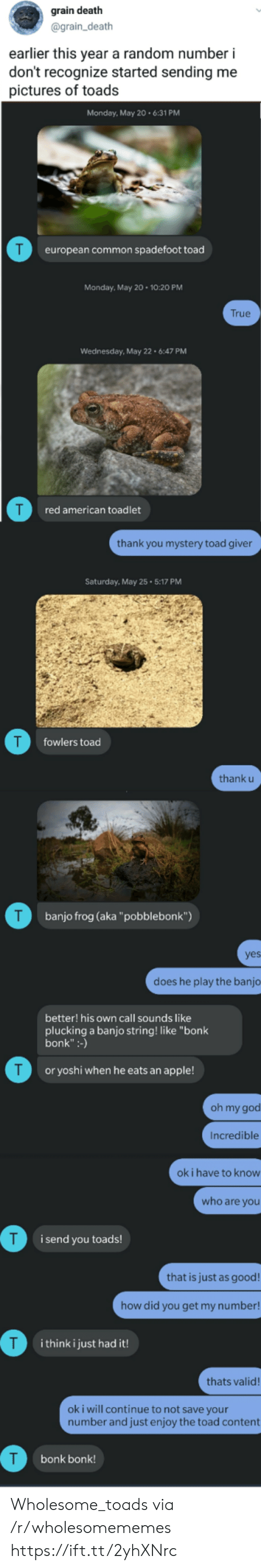"""Thank U: grain death  @grain_death  earlier this year a random number i  don't recognize started sending me  pictures of toads  Monday, May 20.6:31 PM  T  european common spadefoot toad  Monday, May 20 10:20 PM  True  Wednesday, May 22 6:47 PM  red american toadlet  thank you mystery toad giver  Saturday, May 25 5:17 PM  T  fowlers toad  thank u  T  banjo frog (aka""""pobblebonk"""")  yes  does he play the banjo  better! his own call sounds like  plucking a banjo string! like """"bonk  bonk"""":-)  T  or yoshi when he eats an apple!  oh my god  Incredible  ok i have to know  who are you  i send you toads!  that is just as good!  how did you get my number!  T  i think i just had it!  thats valid!  oki will continue to not save your  number and just enjoy the toad content  bonk bonk! Wholesome_toads via /r/wholesomememes https://ift.tt/2yhXNrc"""