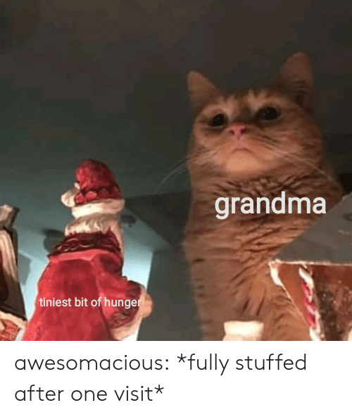 Grandma, Tumblr, and Blog: grandma  tiniest bit of hunger awesomacious:  *fully stuffed after one visit*
