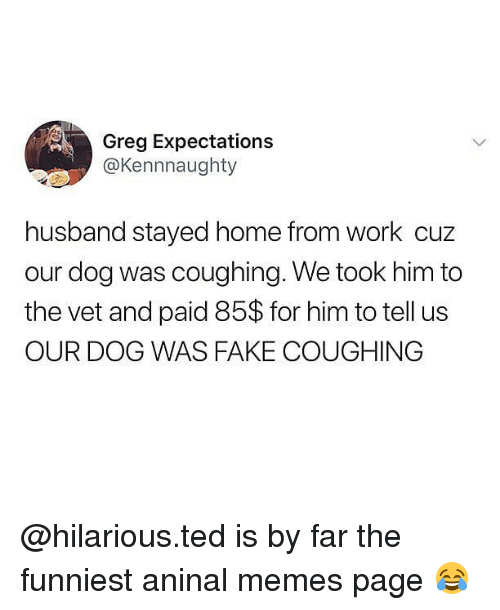 Memes Page: Greg Expectations  @Kennnaughty  husband stayed home from work cuz  our dog was coughing. We took him to  the vet and paid 85$ for him to tell us  OUR DOG WAS FAKE COUGHING @hilarious.ted is by far the funniest aninal memes page 😂