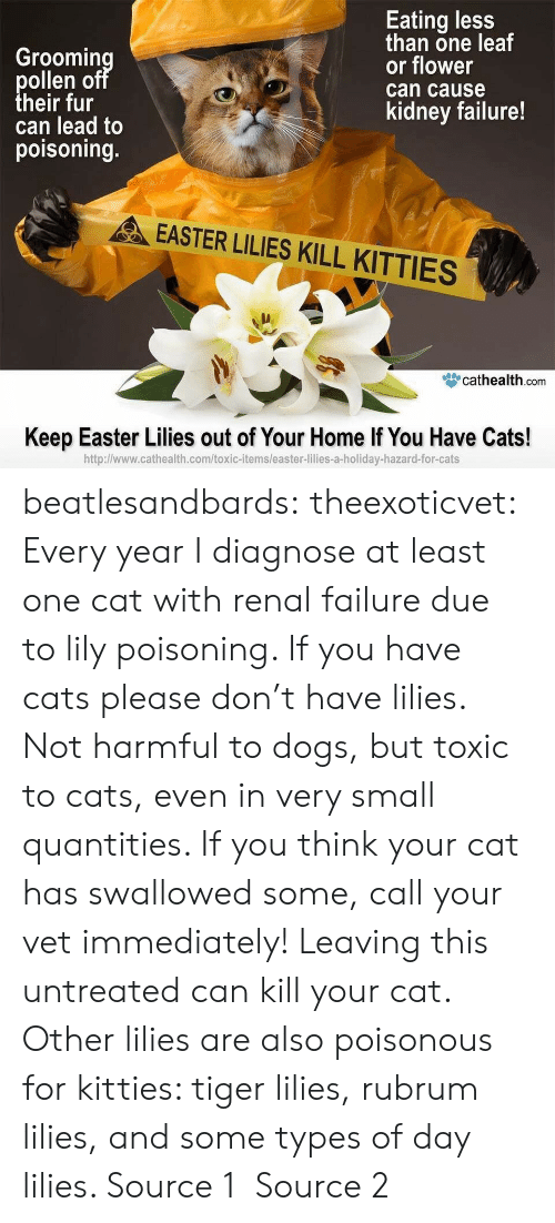 Cats, Dogs, and Easter: Groomin  ollen o  heir fur  can lead to  poisoning.  Eating less  than one leaf  or flower  can cause  kidney failure!  EASTER LILIES KILL KITTIES  眥cathealth.com  Keep Easter Lilies out of Your Home If You Have Cats!  http:l/www.cathealth.com/toxic-items/easter-lilies-a-holiday-hazard-for-cats beatlesandbards: theexoticvet: Every year I diagnose at least one cat with renal failure due to lily poisoning. If you have cats please don't have lilies. Not harmful to dogs, but toxic to cats, even in very small quantities. If you think your cat has swallowed some, call your vet immediately! Leaving this untreated can kill your cat. Other lilies are also poisonous for kitties: tiger lilies, rubrum lilies, and some types of day lilies. Source 1 Source 2