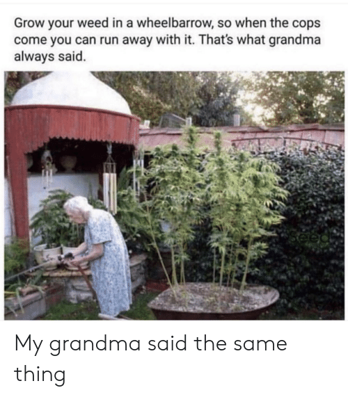 Grandma, Run, and Weed: Grow your weed in a wheelbarrow, so when the cops  come you can run away with it. That's what grandma  always said. My grandma said the same thing