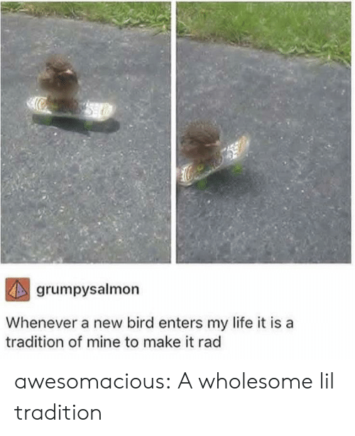 Life, Tumblr, and Blog: grumpysalmon  Whenever a new bird enters my life it is  tradition of mine to make it rad awesomacious:  A wholesome lil tradition