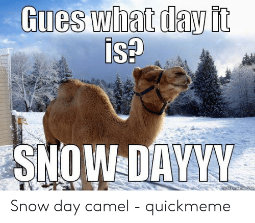 Snow, Camel, and Isa: Gues what day it  ISA  SNOW DAYVM Snow day camel - quickmeme