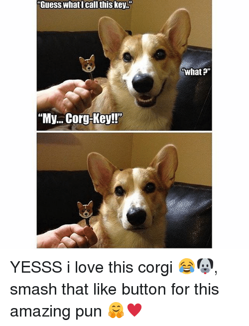 "Memes, 🤖, and Key: ""Guess what I call this key.""  ""My... Corg-Key!""  What?"" YESSS i love this corgi 😂🐶, smash that like button for this amazing pun 🤗♥️"