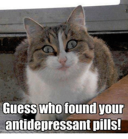 Memes, Guess, and Guess Who: Guess who found your  antidepressant pills