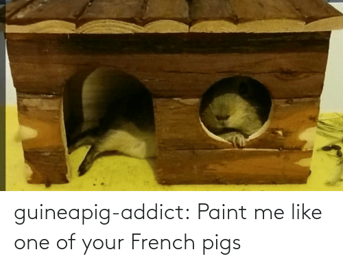 Paint Me Like One Of Your French: guineapig-addict:  Paint me like one of your French pigs