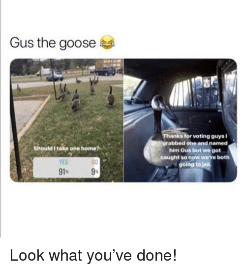 Going To Jail: Gus the goose  Thanks for voting guysi  grabbed one and named  him Gus but we got  caught so now were both  going to jail  Should I take one home?  YES  N0 Look what you've done!
