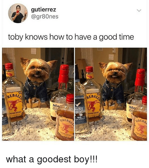 Have A Good Time: gutierrez  @gr80nes  toby knows how to have a good time  EBAL  EBAL  Ma  BA  REBA  90  OCONUT what a goodest boy!!!