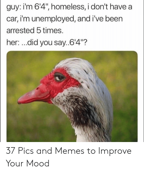 """Unemployed: guy: i'm 6'4"""", homeless, i don't have a  car, i'm unemployed, and i've been  arrested 5 times.  her: ...did you say..64""""? 37 Pics and Memes to Improve Your Mood"""