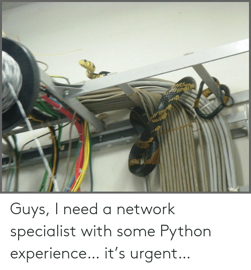 Experience: Guys, I need a network specialist with some Python experience… it's urgent…