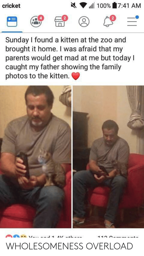 Mad At Me: h( ▼ ill 100%'17:41 AM  cricket  2  2  Sunday I found a kitten at the zoo and  brought it home. I was afraid that my  parents would get mad at me but today I  caught my father showing the family  photos to the kitten. WHOLESOMENESS OVERLOAD
