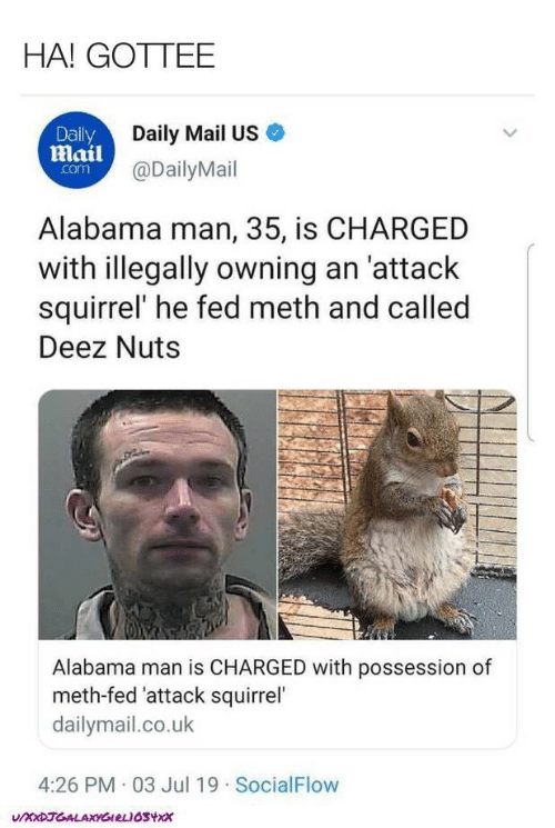 Daily Mail: HA! GOTTEE  Daily Mail US  Daily  mail@DailyMail  com  Alabama man, 35, is CHARGED  with illegally owning an 'attack  squirrel' he fed meth and called  Deez Nuts  Alabama man is CHARGED with possession of  meth-fed 'attack squirrel  dailymail.co.uk  4:26 PM 03 Jul 19 SocialFlow  UXxDJGALAXYGIRLIOSYxx