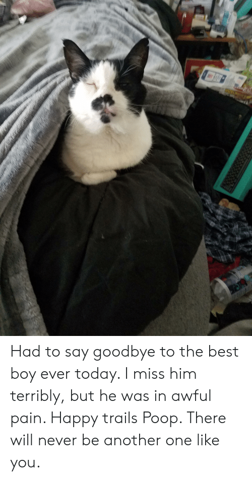terribly: Had to say goodbye to the best boy ever today. I miss him terribly, but he was in awful pain. Happy trails Poop. There will never be another one like you.