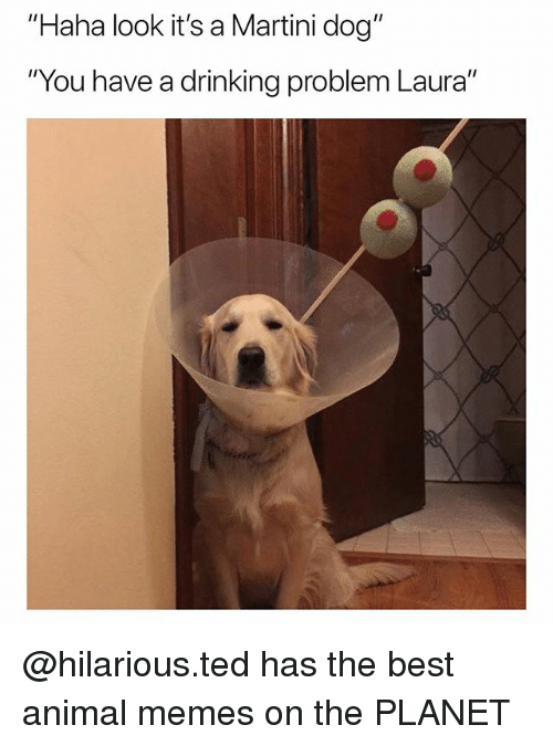 "Drinking, Memes, and Ted: ""Haha look it's a Martini dog""  ""You have a drinking problem Laura"" @hilarious.ted has the best animal memes on the PLANET"
