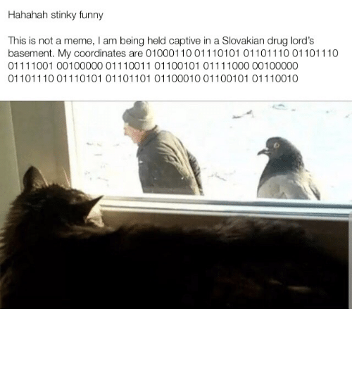 drug lords: Hahahah stinky funny  This is not a meme, I am being held captive in a Slovakian drug lord's  basement. My coordinates are 01000110 011101 01 01101110 01101110  01111001 00100000 01110011 01100101 01111000 00100000  01101110 01110101 01101101 01100010 01100101 01110010 Please I want to see my family