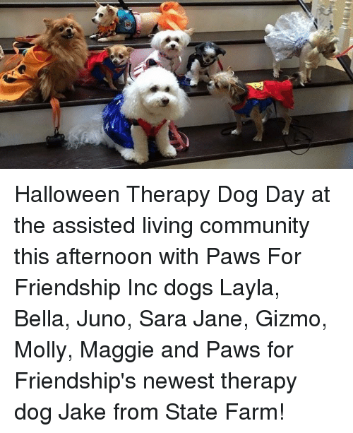 Community, Halloween, and Memes: Halloween Therapy Dog Day at the assisted living community this afternoon with Paws For Friendship Inc dogs Layla, Bella, Juno, Sara Jane, Gizmo, Molly, Maggie and Paws for Friendship's newest therapy dog Jake from State Farm!