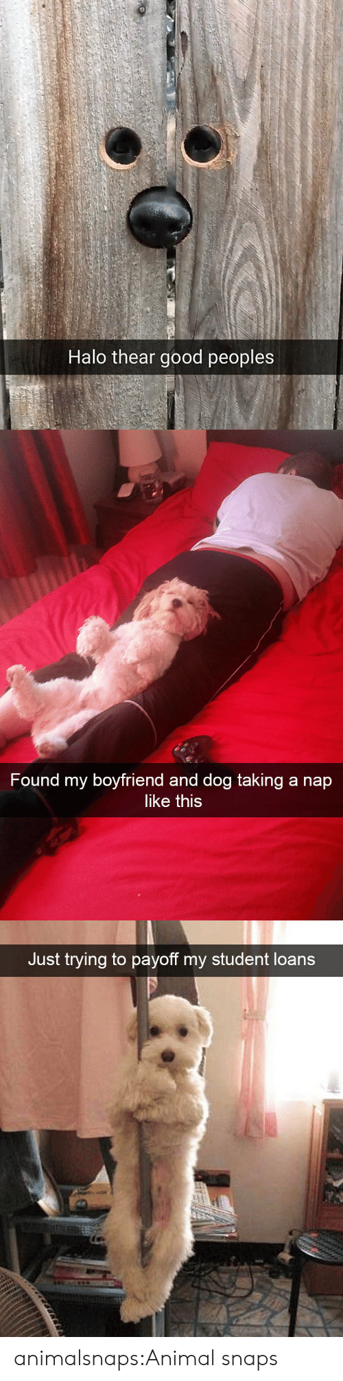 Halo: Halo thear good peoples   Found my boyfriend and dog taking a nap  like this   Just trying to payoff my student loans animalsnaps:Animal snaps