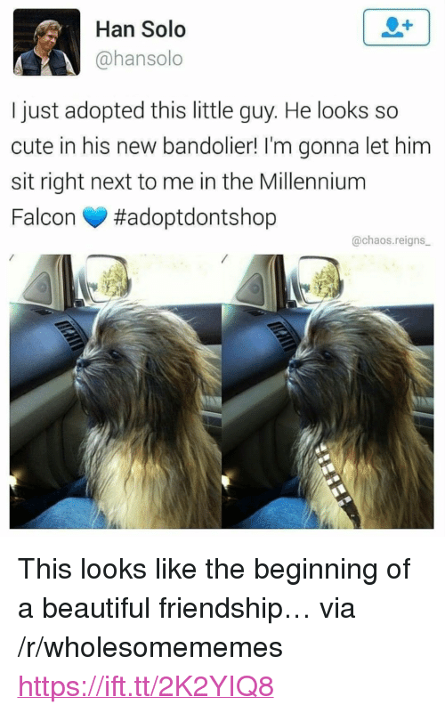 """chaos reigns: Han Solo  @hansolo  I just adopted this little guy. He looks so  cute in his new bandolier! I'm gonna let him  sit right next to me in the Millennium  Falcon #adoptdontshop  @chaos.reigns <p>This looks like the beginning of a beautiful friendship&hellip; via /r/wholesomememes <a href=""""https://ift.tt/2K2YIQ8"""">https://ift.tt/2K2YIQ8</a></p>"""