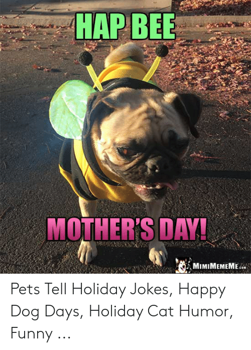 Funny, Mother's Day, and Pets: HAP BEE  MOTHER'S DAY! Pets Tell Holiday Jokes, Happy Dog Days, Holiday Cat Humor, Funny ...