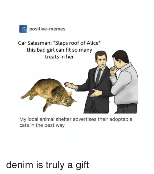 Bad, Cats, and Memes: hapery  positive-memes  Car Salesman: *Slaps roof of Alice*  this bad girl can fit so many  treats in her  My local animal shelter advertises their adoptable  cats in the best way denim is truly a gift