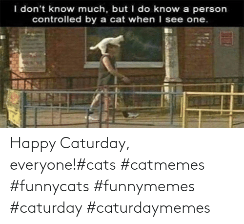 Cats: Happy Caturday, everyone!#cats #catmemes #funnycats #funnymemes #caturday #caturdaymemes