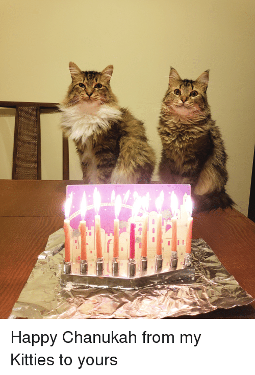Kitties: Happy Chanukah from my Kitties to yours