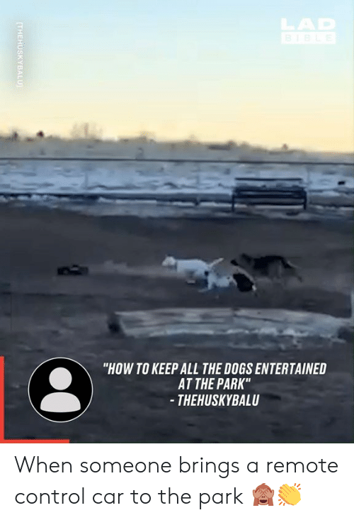 """Entertained: HAR  """"HOW TO KEEP ALL THE DOGS ENTERTAINED  AT THE PARK""""  - THEHUSKYBALU  (THEHUSKYBALU When someone brings a remote control car to the park 🙈👏"""