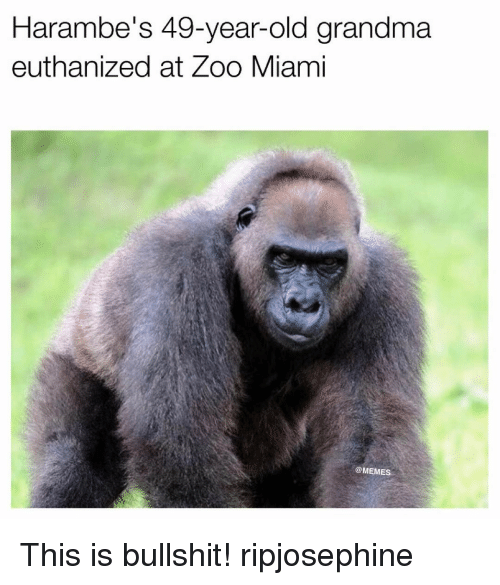 Grandma, Memes, and 🤖: Harambe's 49-year-old grandma  euthanized at Zoo Miami  COMEME This is bullshit! ripjosephine
