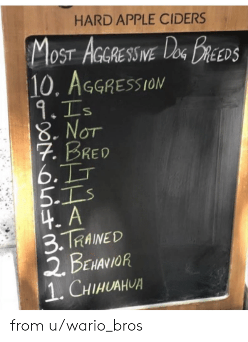 Apple, Chihuahua, and Dank: HARD APPLE CIDERS  MOST AGRESSWE DeG BREEDS  10. AGGRESSION  9.Is  8.NOT  7. BRED  6.TT  5.Is  4.A  3.TRAINED  2 BENANIOR  1. CHIHUAHUA  IVE from u/wario_bros