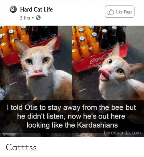 Kardashians: Hard Cat Life  O Like Page  5 hrs • O  LINNKO  CocaCola  200 ML237  I told Otis to stay away from the bee but  he didn't listen, now he's out here  looking like the Kardashians  boredpanda.com Catttss