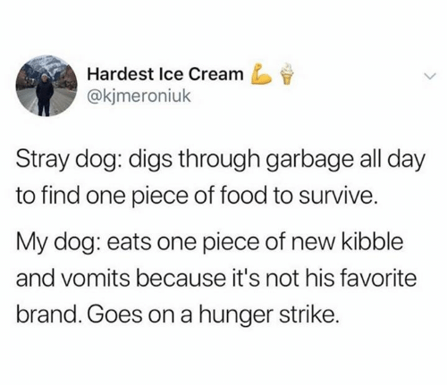 Food, Ice Cream, and One Piece: Hardest Ice Cream  @kjmeroniuk  Stray dog: digs through garbage all day  to find one piece of food to survive.  My dog: eats one piece of new kibble  and vomits because it's not his favorite  brand. Goes on a hunger strike.