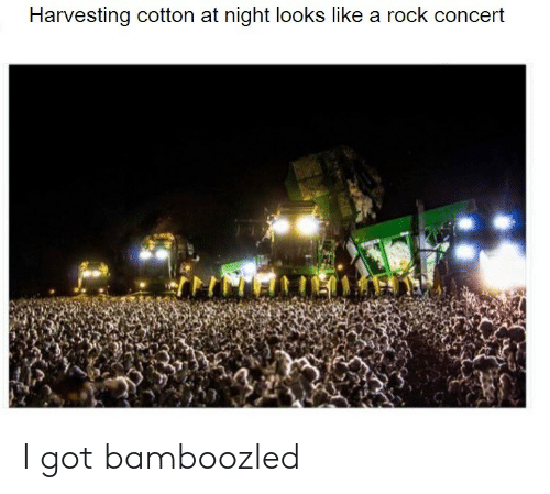 concert: Harvesting cotton at night lookss like a rock concert I got bamboozled