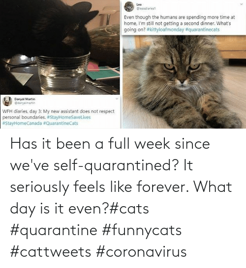 Forever: Has it been a full week since we've self-quarantined? It seriously feels like forever. What day is it even?#cats #quarantine #funnycats #cattweets #coronavirus