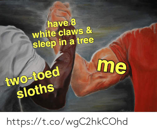Memes, Tree, and White: have 8  white claws &  sleep in a tree  me  two-toed  sloths  Rnda https://t.co/wgC2hkCOhd
