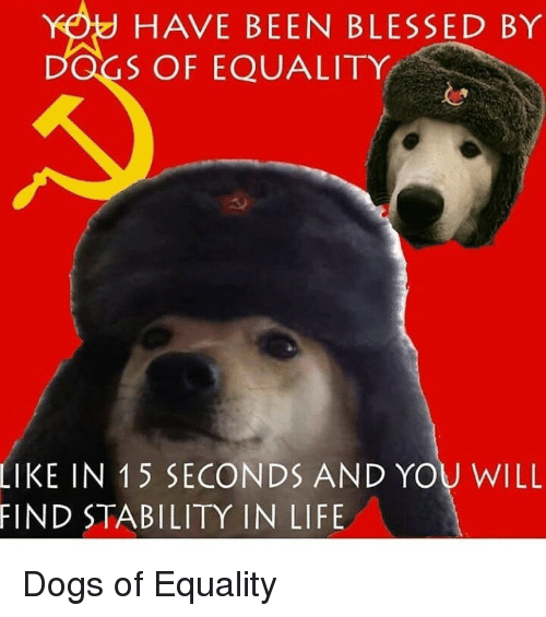 Blessed, Dogs, and Life: HAVE BEEN BLESSED BY  DOGS OF EQUALITY  IN 15 SECONDS AND YOU WILL  STABILITY IN LIFE  LIKE  FIND Dogs of Equality